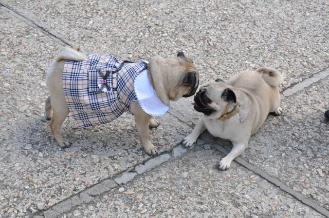 Аллергия на гречку у собак
