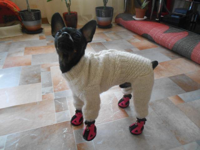 Фото одежда для маленьких собак своими руками