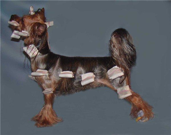как сделать с какого возраста собака ходит нп выставки эфирного