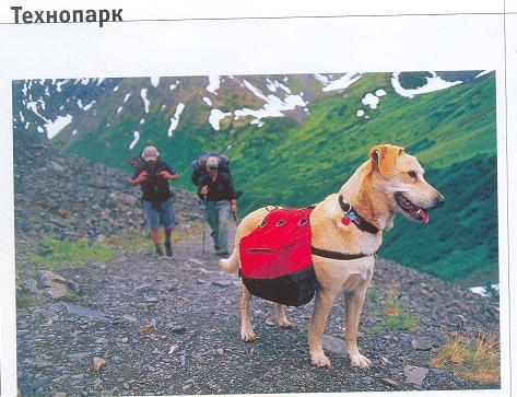 Выкройка рюкзака для собаки с рюкзаком по тайге