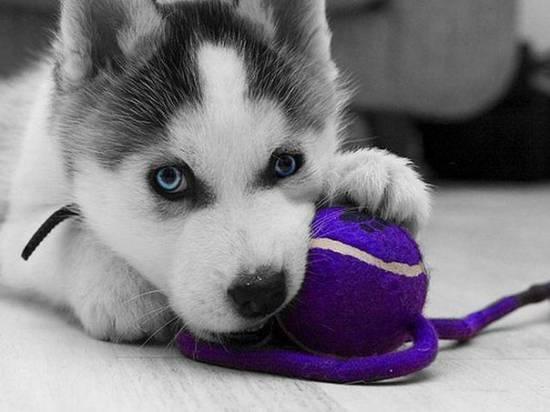 лайка фото с голубыми глазами
