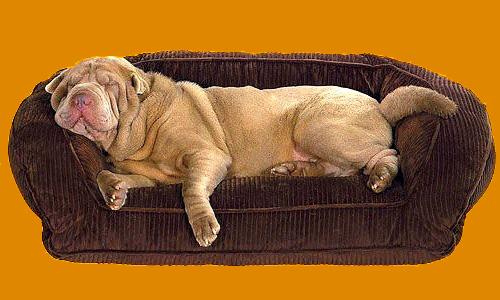 Лежанка своими руками для большой собаки