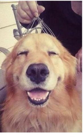 аллергия у собаки чем лечить зуд кожи