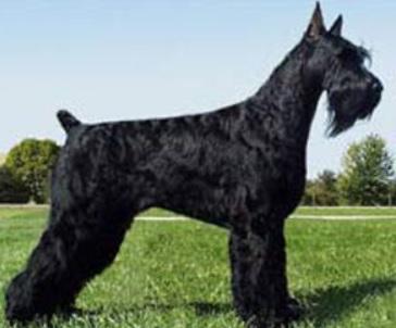 собаки и породы фото и названия