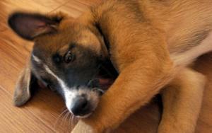 Очаровательный 3-месячный щенок ищет себе дом!
