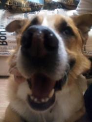 У Персея умер хозяин...Солнечный рыжий пес ищет дом!
