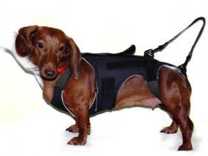 Корсет для собаки для позвоночника 148