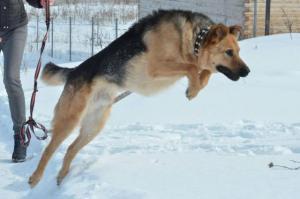 Собака ищет дом