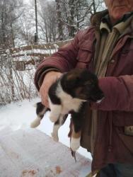 Возьми щенка домой