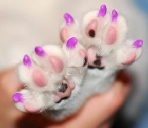 Антицарапки для кошек, выезд на дом.