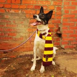 Собака Поттер в добрые руки, бесплатно