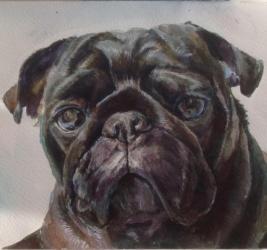 Рисую портреты животных на заказ (Акварель)