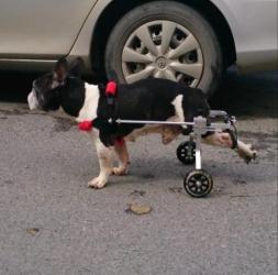 Инвалидная коляска для собак и кошек