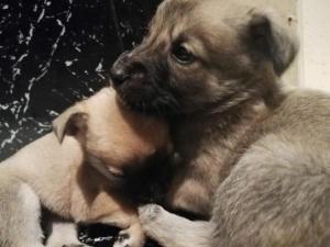 Два маленьких щеночка ищут добрых и ответственных хозяев.