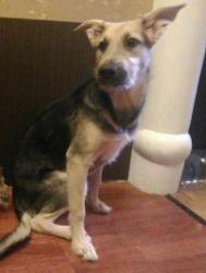 Собака Эльза ищет семью