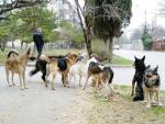 Бродячие собаки-что с ними делать?