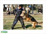 Имеет ли курс ЗКС какие-то последствия для психики собаки? Нужна ли работа с фигурантом для служебной собаки?