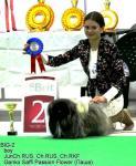 Подготовка и показ собак всех пород на выставках. СПб
