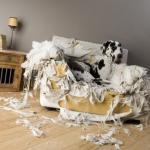 Приступы агрессии у собаки