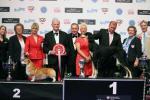 победители WORLD DOG SHOW-2012