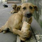 Бродячие собаки: образ жизни