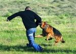собаки-  защитники