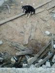 Случайно обнаруженная собака на стройке..