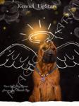 Magic Charm - разнообразные эксклюзивные изделия для собак