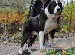 Сложные породы собак