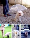 Зонт для питомца