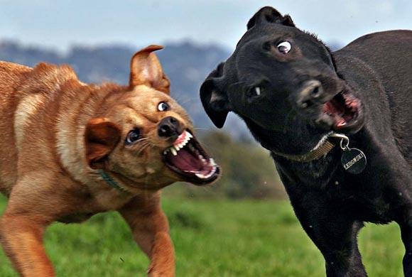 спиннингом в своре собак жестокие нравы данная
