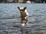 А ходить по воде не так-то уж и легко...