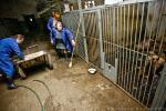 Фото из приюта для собак