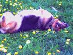 Валяется в траве