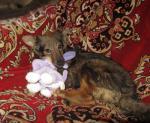 Воронеж. Многострадальный щенок Муха ищет заботливых родителей.