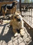 Очаровательная помесная собачка Дина отдается в заботливые руки