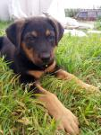 Пристраивала щенка и пристроила))))