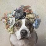 Софи Гомонд: фотографии в поддержку брошеных собак
