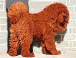 Big Splash самая дорогая собака