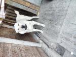 Гематома на шее у собаки, что делать?