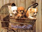 Обои собаки. Малыши в коляске