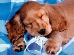 Обои собаки. Сплю