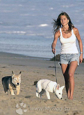 Дженнифер энистон фильмы собака игра губка боб на xbox 360 freeboot