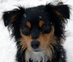 Дворняжка Mydog Su сайт о собаках