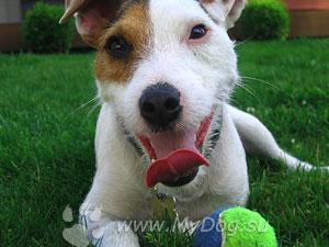 Обучение глухих собак