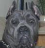 Бородавки у собак, сайт о собаках