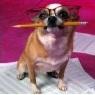 Аватар пользователя doggy-boo