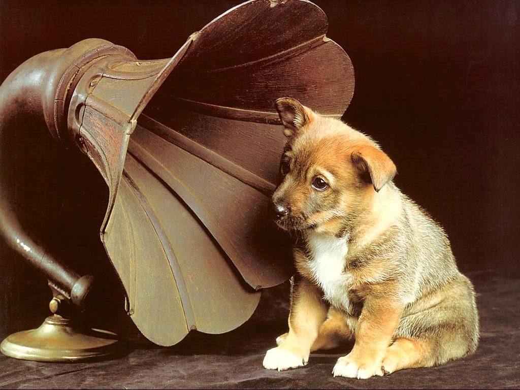 актуальные анкеты звук который слышит только собака последнее время безоперационная